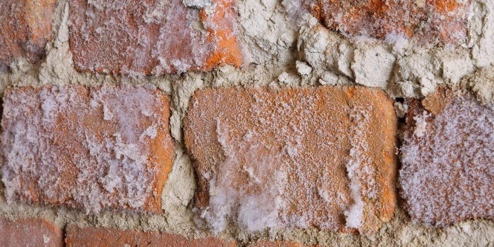 Salpêtre Mur Humide Expert En Traitement Du Salpêtre